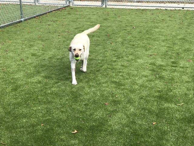I can Fetch!